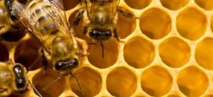 nozioni-apicoltura