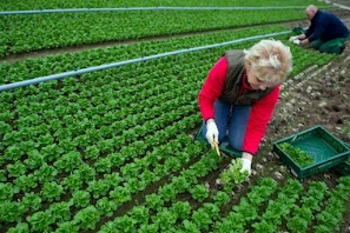5525-pac-scotta-ln-largo-a-donne-e-giovani-in-agricoltura-350